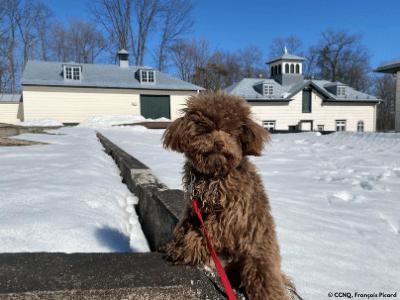 Séance photo avec son chien à Québec