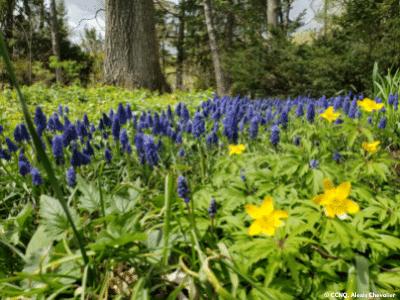 Fleurs dans le parc du Bois-de-Coulonge à Québec