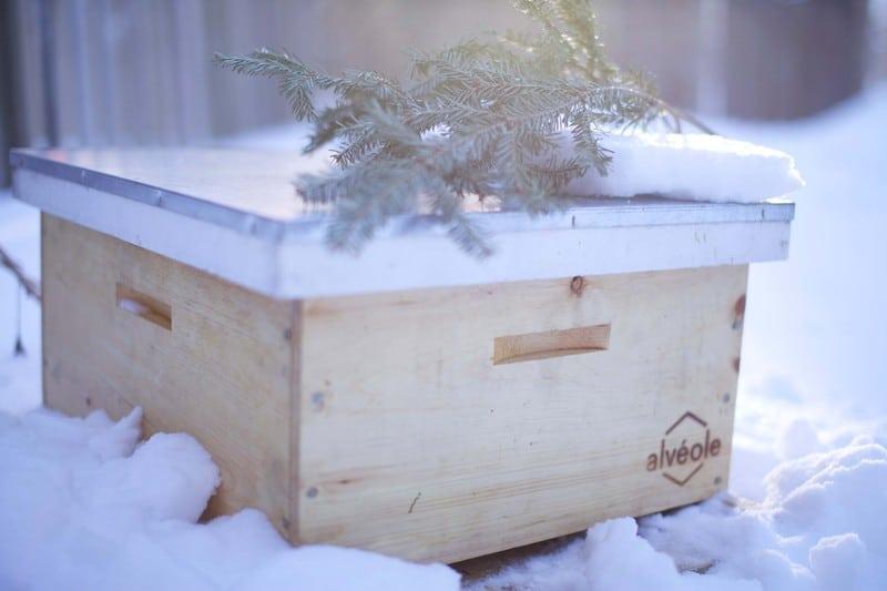Ruches l'hiver - Alévole